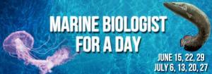 Biologist-for-a-Day-Website-Banner1-1