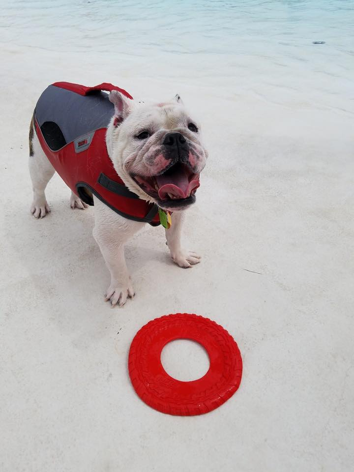 Pooch Plunge Aug 19th